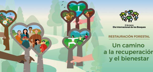 Cada any, el 21 de març, elDia Internacional dels Boscoscelebrem les maneres en què els boscos i els arbres ens sostenen i ens protegeixen.Un dia que neix amb la finalitat […]