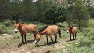 La Federació d'ADF col.labora amb tasques de voluntariat per acondicionar 600 ha al Parc del Garraf perquè puguin pasturar durant aquest hivern 70 cavalls de la Fundació Miranda que venen […]