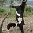 Després de varis anys de proves pilot i estudis científics sobre l'efecte de les pastures del sotabosc amb animals herbívors, la Federació s'ha plantejat començar a treballar activament per reduir […]