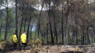 Un llamp va provocar un incendi forestal a olivella el dia 22 de juliol cap a les 19:30 h de la tarda. Ràpidament es van mobilitzar els efectius d'extinció dels […]