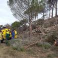 Una dotzena de voluntaris van participar diumenge dia 5 de febrer en la tala d'arbres cremats de l'incendi del passat estiu a Torrelavit. Aquest paratge es prepara per ser reforestat […]