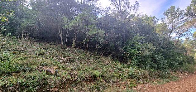 Els dissabtes dies 16 i 23 d'octubre es realitzaran pràctiques de treballs forestals a Mediona aprofitant una zona de treball d'una línia de defensa en un camí forestal a la […]
